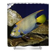 Queen Angelfish Shower Curtain