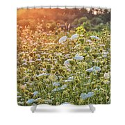 Queen Anne At Sunset Shower Curtain
