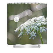 Queen Anne In The Morning 2 Shower Curtain