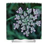 Queen Anne Shower Curtain