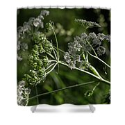 Queen Anne Lace In The Wind Shower Curtain