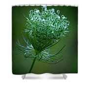 Queen Annes Lace - 365-164 Shower Curtain