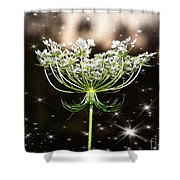 Queen Annes Lace And Sparkles At Dusk Shower Curtain