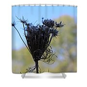 Queen Annes Lace In Autumn Shower Curtain
