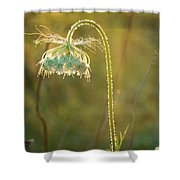 Queen Anne's Lace In Evening Shower Curtain
