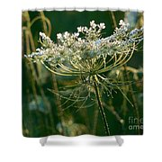 Queen Anne's Lace In Green Horizontal Shower Curtain