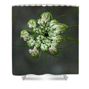 Queen Anne's Lace In Waiting Shower Curtain