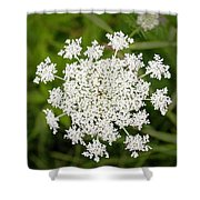 Queen Anne's Lace No 2 Shower Curtain