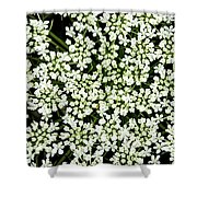 Queen Anne's Lace Patterns Shower Curtain
