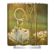Queen Anne's Lace Sunset Shower Curtain
