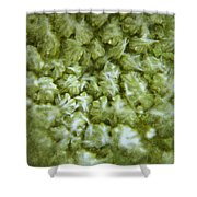 Queen Annes Lace Shower Curtain