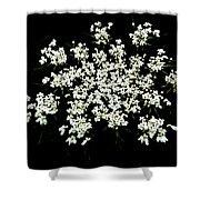 Queen Anne's Lace Wildflower - Daucus Carota Shower Curtain