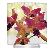Queen Of Orchids Shower Curtain