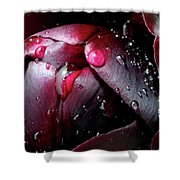 Queen Of The Night Cries In Joy Shower Curtain