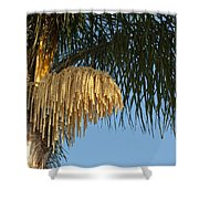 Queen Palm Tree Flower Shower Curtain