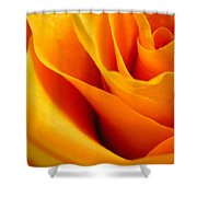 Queen Rose Shower Curtain by Rhonda Barrett