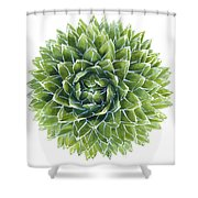 Queen Victoria Agave Succulent Shower Curtain