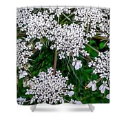Queens Lace Shower Curtain