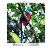 Quetzal In Monteverde Shower Curtain