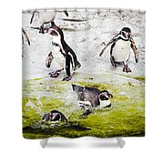 Quick Dip Shower Curtain