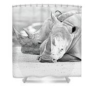 Rhino Quiet Moment Shower Curtain