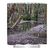 Quinault Rain Forest 3147 Shower Curtain