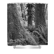Quinault Rain Forest 3152 Shower Curtain