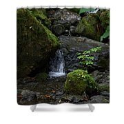 Quinault Washington Rain Forest Shower Curtain