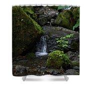 Quinault Washington Rain Forest Shower Curtain