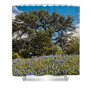 Quintessential Texas Hill Country County Road Bluebonnets And Oak - Llano Shower Curtain
