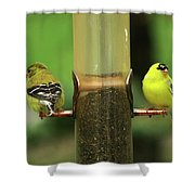 Quite The Pair Shower Curtain
