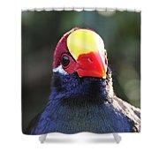 Quizzical Bird Shower Curtain