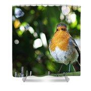 Quizzical Robin Shower Curtain