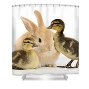 Rabbit And Ducklings Shower Curtain