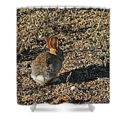 Rabbit. Shower Curtain