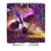Raccoon Animal Cute Mammal  Shower Curtain
