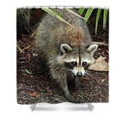 Raccoon Bandit Shower Curtain