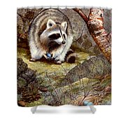 Raccoon Found Treasure  Shower Curtain