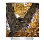 Raccoon Nape Shower Curtain