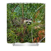 Raccoon Napping On Log Shower Curtain