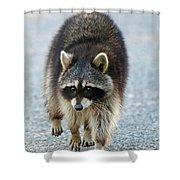 Raccoon On The Prowl Shower Curtain