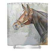 Race Horse Study 1 Shower Curtain