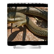 Racer On The Rio Grande Shower Curtain