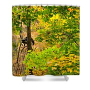 Racoon In Fall Trees Shower Curtain