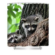 Racoons In Tree Shower Curtain