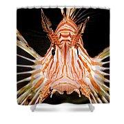 radial Lionfish Pterois radiata Shower Curtain