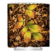 Radiant Beech Leaf Branches Shower Curtain