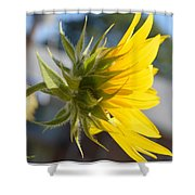 Radiant Moment Shower Curtain