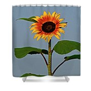 Radiant Sunflower Shower Curtain