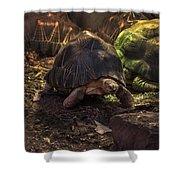 Radiated Tortoise Shower Curtain